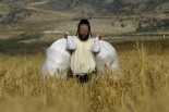 An Ultra-Orthodox Jew carries sacks full with wheat after harvesting it using hand sickles in a field some three kilometers from the Mevo Horon settlement in the Israeli occupied West Bank, on May 22, 2012.  (Photo credit: MENAHEM KAHANA/AFP/GettyImages)