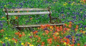 Wildflowers and bench