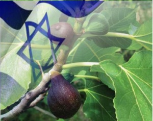 the-fig-tree-and-israel