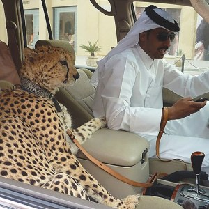 On the road in Dubai.
