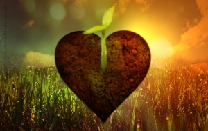 soil-of-your-heart-by-sustainabletraditions